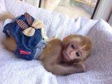 宠物猴子价格