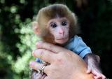 哪里有卖猴子的